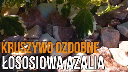Kruszywa dekoracyjne do Ogrodu – Łososiowa Azalia